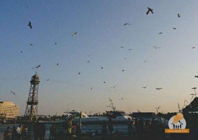 gaivotas Produção Artística da Jovem Visionário Social 18