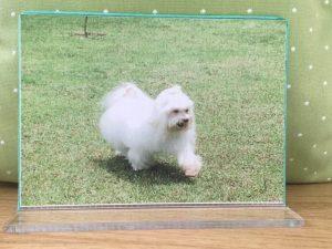 Quadro Personalizado confecionado para seu Pet